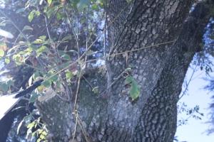 sm file_ detail of flying diamond peak line to tree